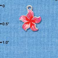 C3572 tlf - Hot Pink and Orange Plumeria Flower - Silver Plated Charm (6 per package)